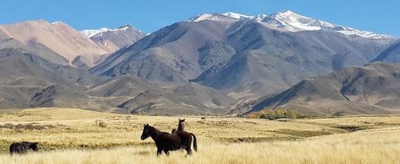 Zenngo Argentine Mendoza Yoga chevaux criollos andes